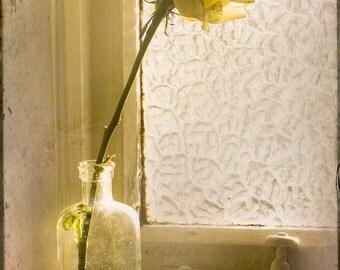 Rose Window - Original Fine Art Photograph - Rose Bottle Window