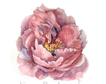 Peony- Original watercolor fine art print, pink flower painting, wall art