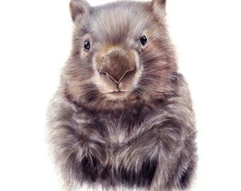 wombat art  - wombat illustration - art prints - wombat  - nursery art prints - wall art - childrens art  - A4
