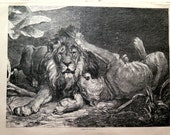 1879 Tender scene of lion and lioness engraving, big size vintage felines print, oddity curiosity lions plate, rare dear lions plate