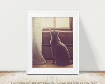 Cat Photograph, Soft Purple Pastel, Animal Photography, Cat and Window Fine Art Print, Sweet Cat Portrait, Cat Silhouette, Cat Portrait