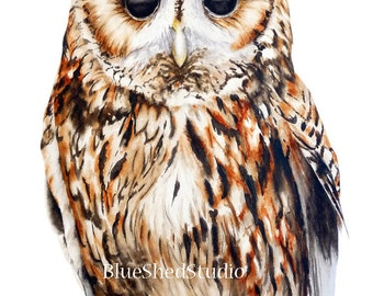 Owl Fine Art Print - Owl watercolour print, Tawny Owl painting, Art print, nature painting, watercolour print.