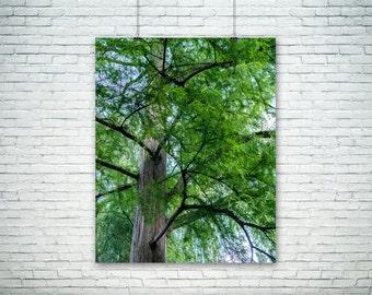 Nature Photography, Kneeling Tree Print, Green Home Decor,  Large Wall Art, Fine Art Photography