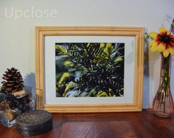 Evergreen Droplets Photograph, Evergreen Print, Wall Decoration