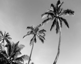 Black and White Wall Art, Palm Trees, Black and White Beach Photography, Tropical Print, Hawaii Art, Nature Photography, Palm Tree Print