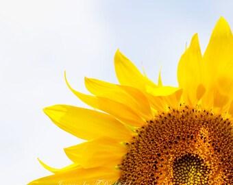 Sunflower, Blue Sky, Flower, Fine Art Photography, Fine Art Print, Nature photography