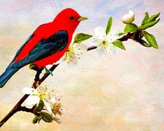 Scarlet Tanager Bird, Bird Wall Art, Bird Photography, Red Tanager Bird Closeup, Fine Art Photography, Red Bird Art Print, Apricot Tree