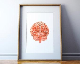 The Posterior Brain in Clay Red - Brain Art Watercolor - Brain Print - Neurology Art - Medical Illustration
