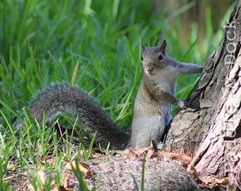 Squirrel by Tree, Instant Download