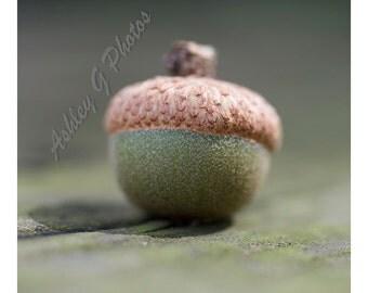 acorn photograph, nature photography, macro photography