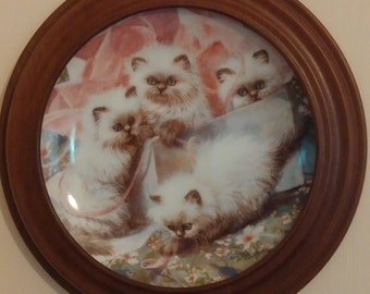 "Cat Collector Plate ""All Wrapped Up"" Himalayan Cats Pretty in Pink Amy Brackenbury"