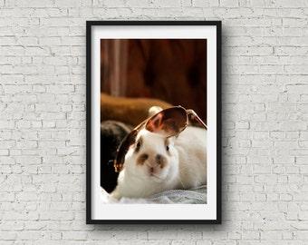 Rabbit with Sunglasses Print. Rabbit Photography. Bunny Photo. Cute Rabbit. Cute Bunny. Spotted Rabbit. Pet Photography. Wall Art.