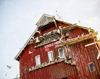 Seagull Territory, Røst, Rost, Norway, Lofoten Islands, Arctic Circle, Scandinavia, Photo, Photography, Fine Art, Print, Birds,