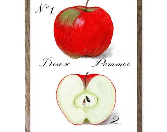 Botanic style apple poster with French script. Kitchen wall poster. French calligraphy. Vibrant red and white. 8 x 10 vertical glicee print.