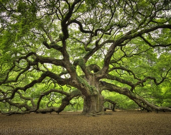 Angel Oak FREE SHIPPING Vintage Rustic Home Decor Wall Art Fine Photograph Nostalgia Charleston John's Island South Carolina Tree Lake House