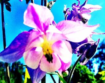 "ART CARDS ""FLOWERS"""