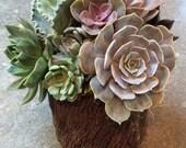 Succulent Arrangement in Tree Trunk Vase