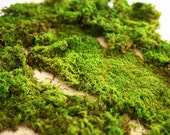 1 lb Premium Preserved Forest Moss.