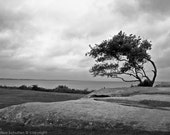 New England Art Print, Windswept Tree, Nature Photography, Black and White Landscape, Ocean and Sky, Cloudy Sky Over Ocean, Bent Tree