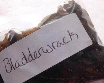 Bladderwrack(Free Shipping in USA)MWCBW001