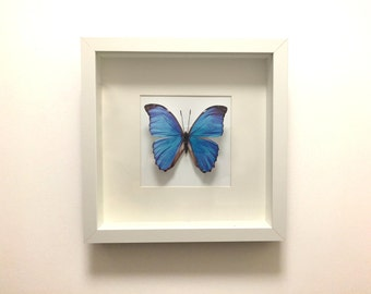 BUTTERFLY  II  -  Handcrafted 2D print mounted inside picture frame