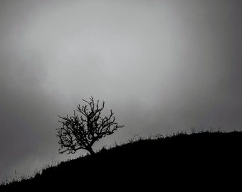 A Lonely Tree in The Cambrian Mountains, Wales, Fine art Print