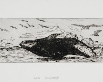 Whale Etching Print Original/ Baja Humpback Whale / black ink, acid free archival paper