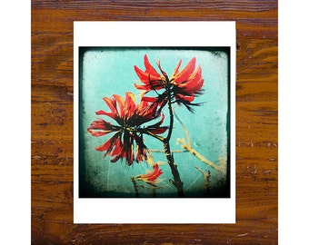 8x8 print [JCP 011] - Coral Tree 4
