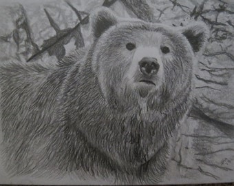 Grizzly Bear Original Portrait Pencil Sketch 9 x 12 inch U Provide Picture by Pigatopia