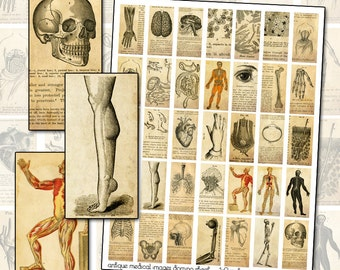 Antique Medical Engraving Domino Digital Collage Sheet for jewelry decoupage altered art 1x2 inch 25.4 mm x 50.8 mm