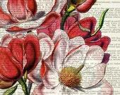 magnolia I dictionary print