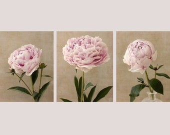 Peony Print Set, Botanical Print Set, Vintage Style, Cottage Chic Decor, Peony Art, Fine Art Set