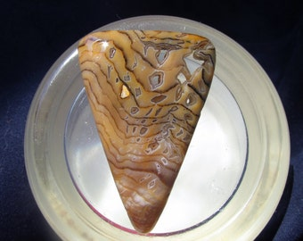 Hell's Canyon Petrified Wood Cabochon