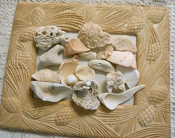 CORAL CONCH & Sea Shells Mixed Lot 8 oz Atlantic Ocean Washed Tumbled Smooth St Kitts Beach Organic Shapes DIY Collage Aquarium Terrarium 1