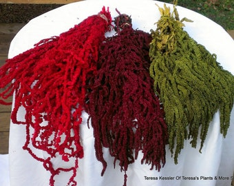 Hanging Amaranthus-Dried & Preserved floral-Olive Green-Green-Purple