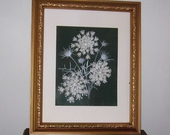 Pressed floral,Spectacular Queen Annes Lace, 11x14, on green canvas. Gold frame