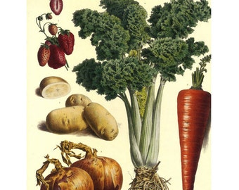 Paris Vegetable Print Large on Heavy paper Sale, Buy 3 Get 1 Free
