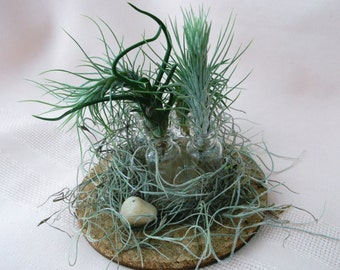 Miniature airplant arrangement features tiny bottles and tiny airplants