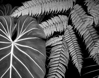 Fern Art, Tropical Leaves,  Nature Wall Art, Black and White Photography, Fine Art Photography, Nature Print, Art Prints, Garden Art