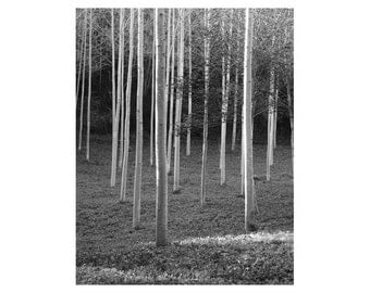 """Fine Art Black & White Nature Photography of Woodland in France - """"White Woods 3"""""""