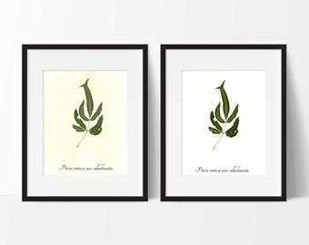 Fern Botanical PRINT - Cretan Brake Fern Botanical Art Print