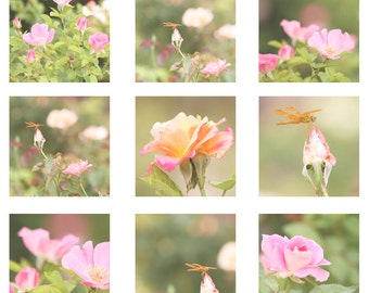 Flower Photo Set - Photography set - Cottage Chic Photo Set - Flower Photography - Pastel Photo Set - Nursery Photo Set - Wall Art