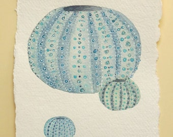 Original watercolour sea urchin shell illustration painting
