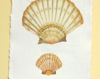 Original watercolour painting illustration of a scallop clam shell ocean series