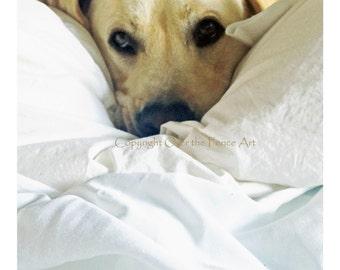 YELLOW LABRADOR  PUPPY Naps Animal Art Yellow Lab Animal Photography Dog Art Dog Photography