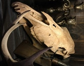 Huge Skull, old, weathered and worn with bottom jaw  at Gothic Rose Antiques