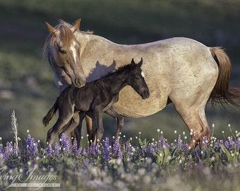 Electra and Pandora at Dawn - Fine Art Wild Horse Photograph - Wild Horse - Pryor Mountains - Cloud