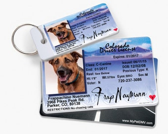 Colorado Personalized Pet License ID w/ Collar ID Tags