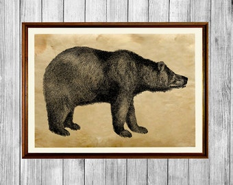 Bear poster Animal art print Rustic home decor AK640