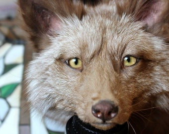 Custom OOAK Soft mount Taxidermy Fox